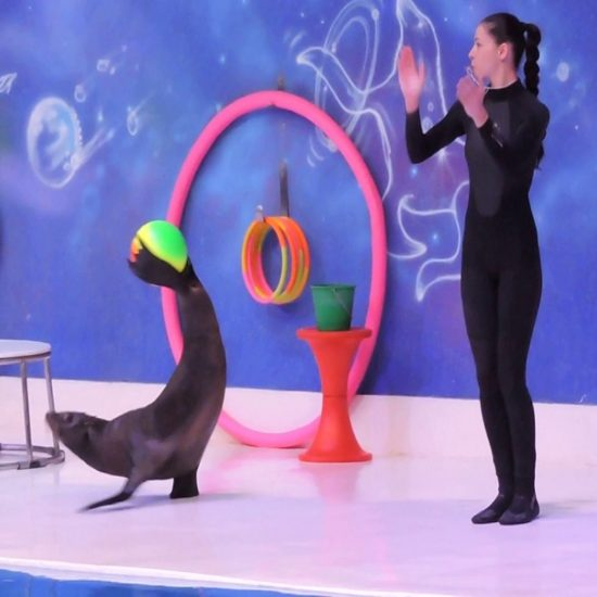 dolphin Show (Seal)